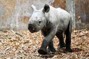 Rhinoseros Folly Farm